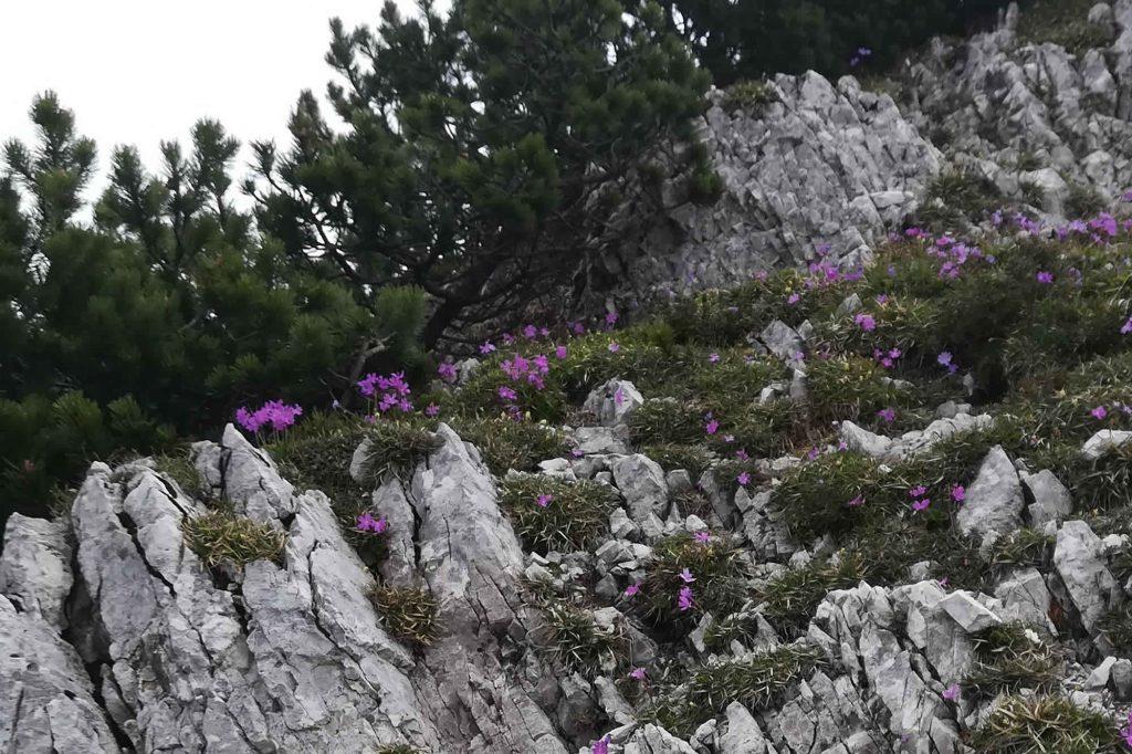 Di fiore in fiore verso la parte alta