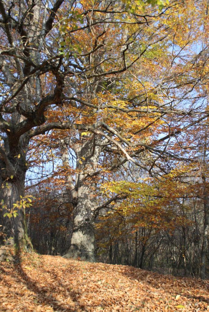 autunno sull'altopiano