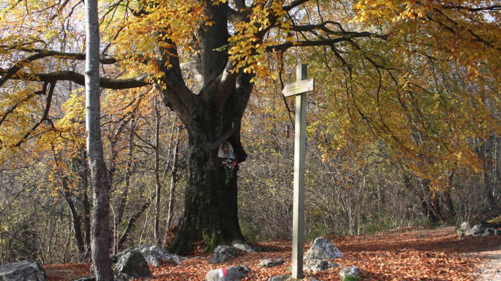 Castani nel monumento naturale di Cariadeghe